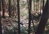 Okutama_river3